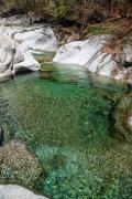 В озере Южной Кореи обнаружили пираний